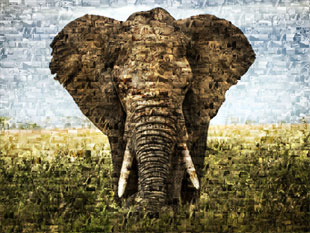 photo mosaic elephant 3
