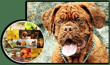 dog mosaic details