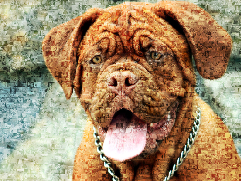 dog photo mosaic bordeaux dog