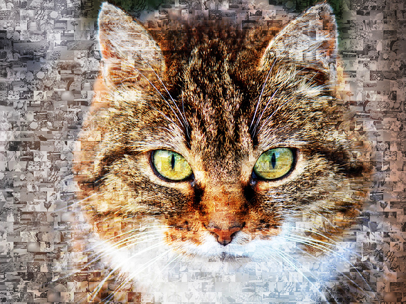 photo mosaic cat