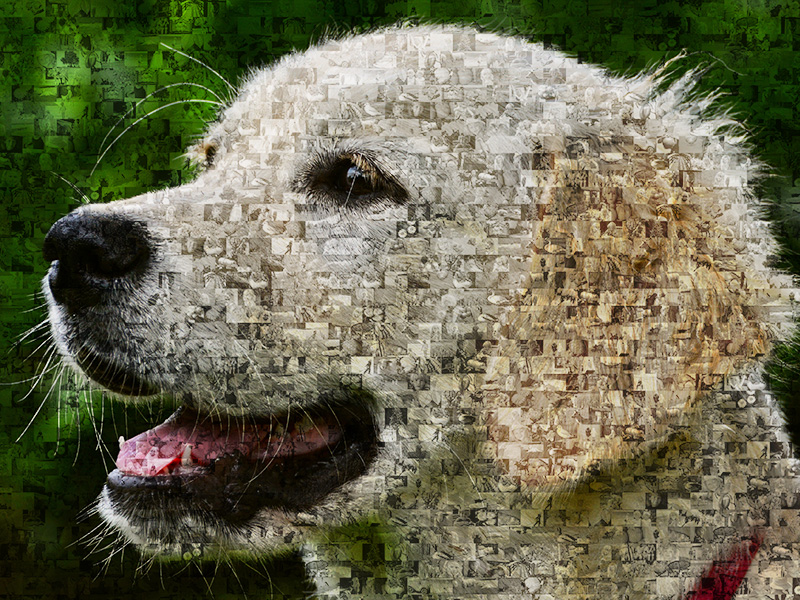 photo mosaic labrador retriever